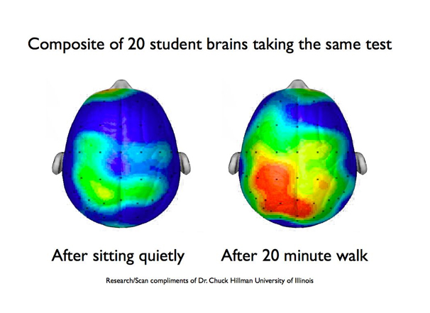 brain cerebellum exercise